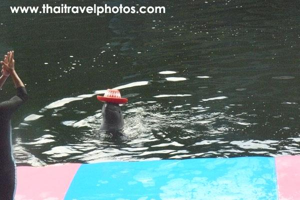 pattaya dolphin world